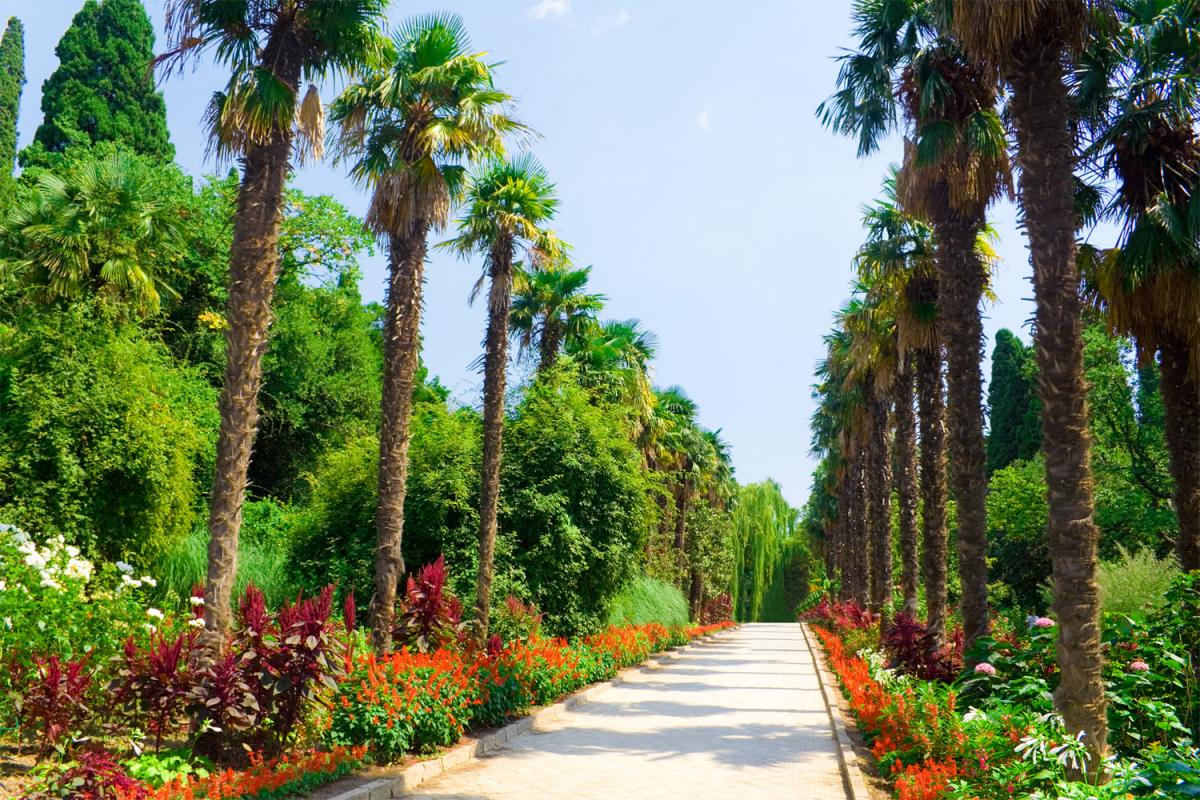 Никитский Ботанический сад 3