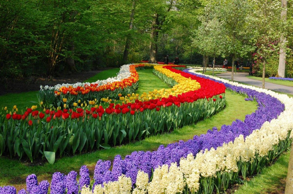 Никитский Ботанический сад 4